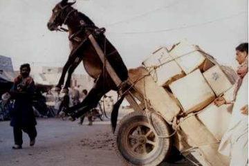 donkey-burro